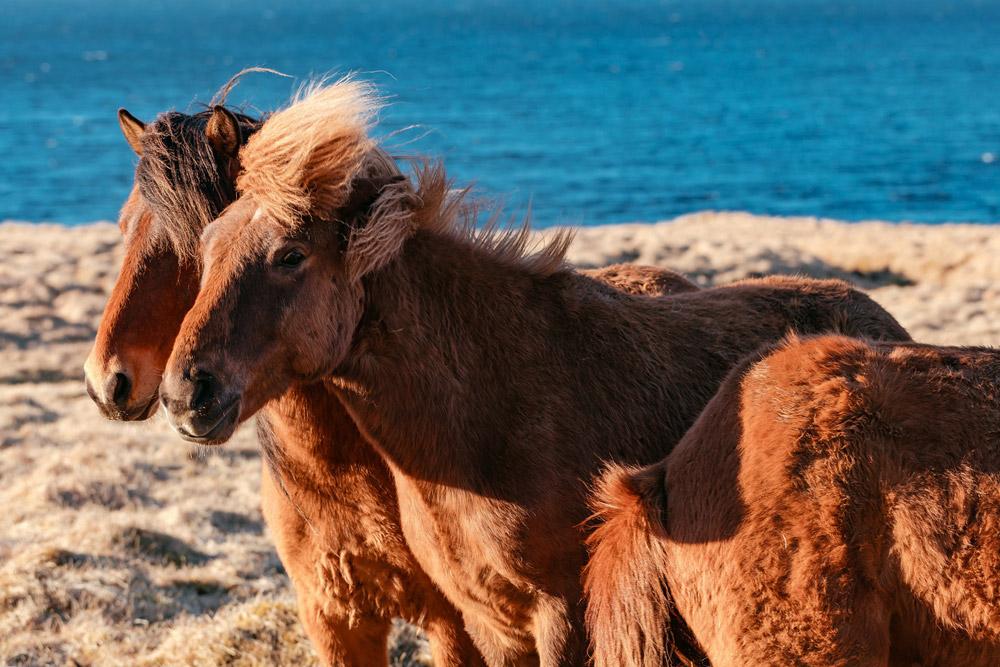 ponies are sunbathing