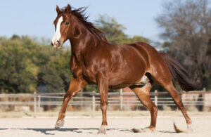 quarter horse is posing close up