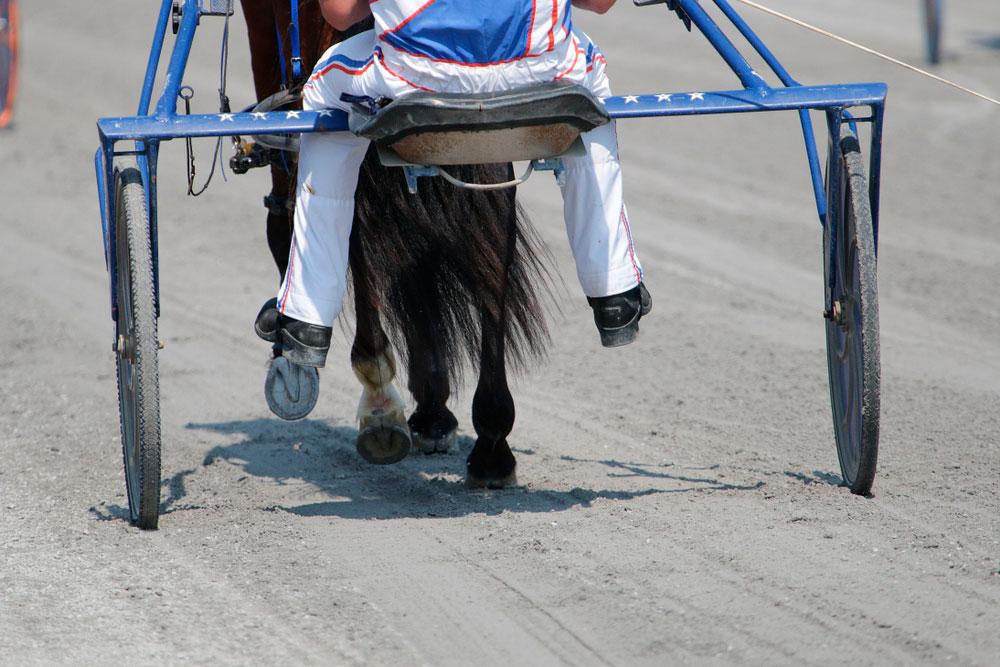 racer sitting behind Standardbred Horse