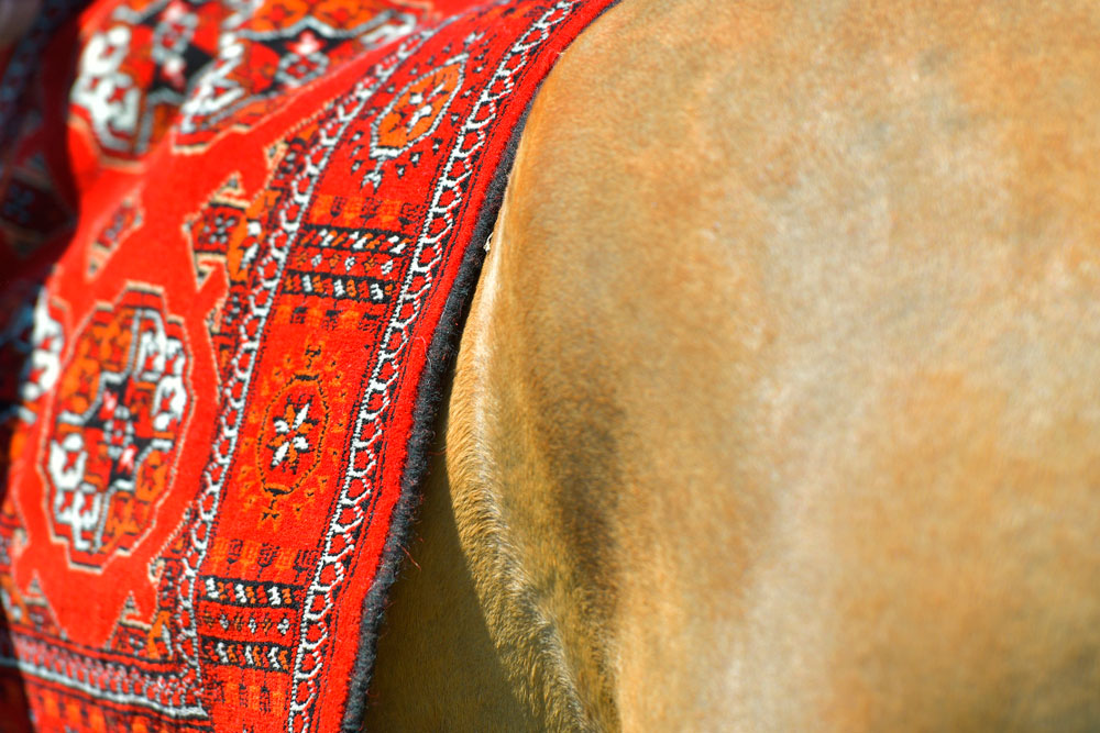 red rug as horse saddle pad