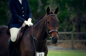 rider and her Standardbred Horse