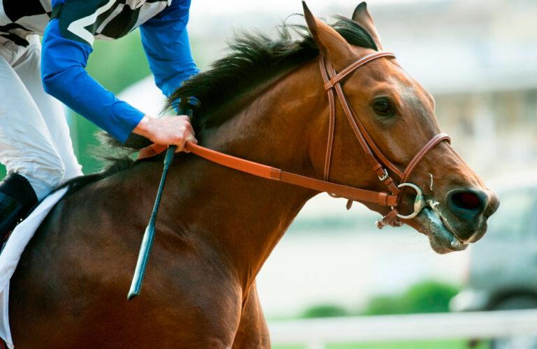 running horse on races