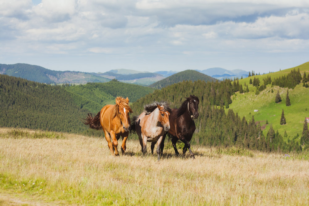 three horses on the meadow