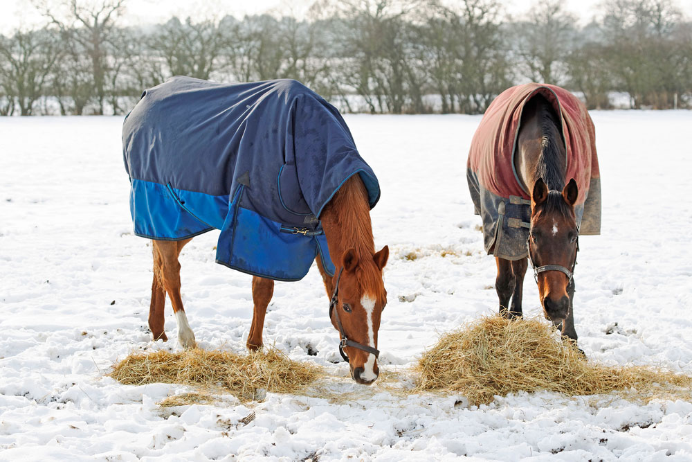 two horses in blankets are grazing in snow