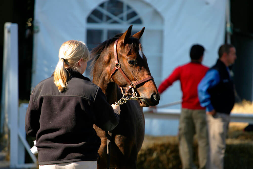 weanling and handler wait for its turn