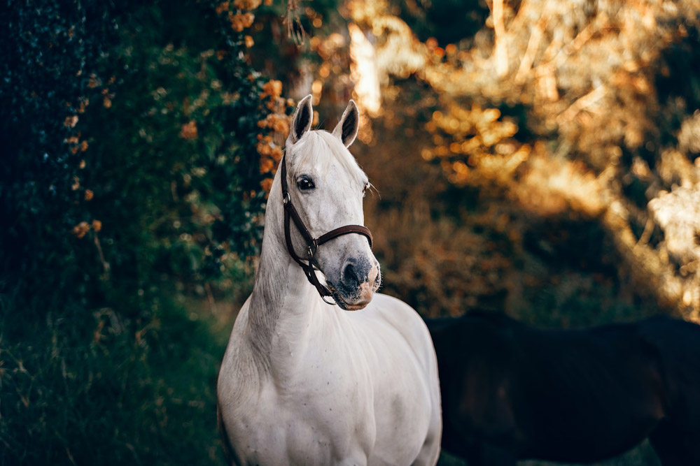 white haltered horse amid the trees