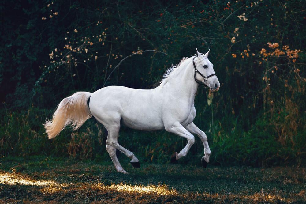 white horse playing around