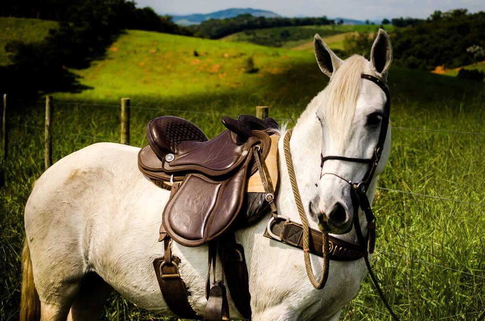 white horse posing on camera