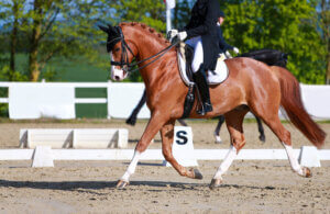 woman and her horse are performing gaits at a show