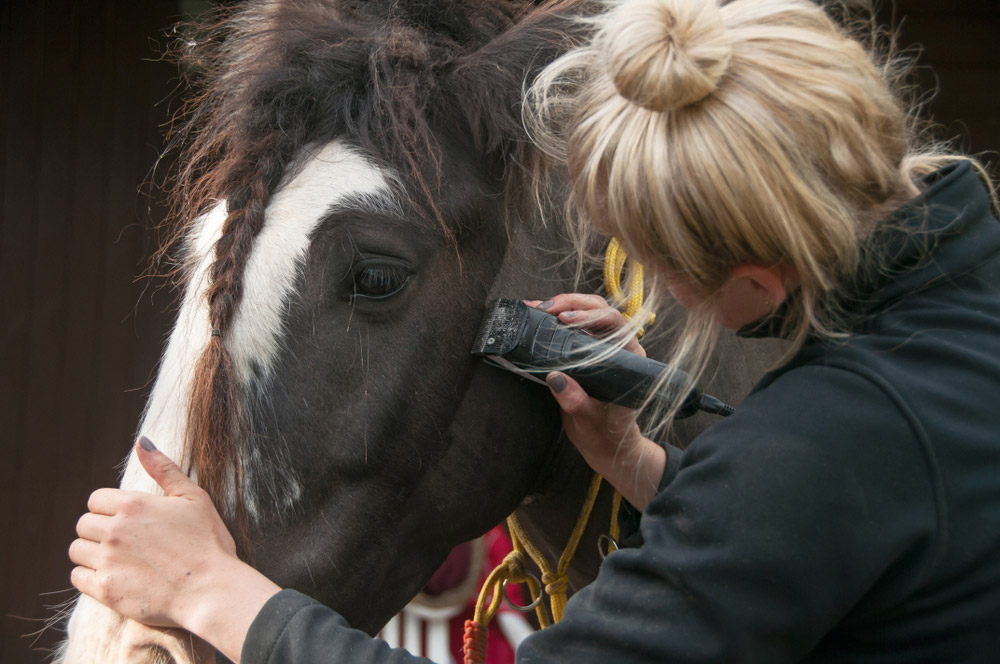 woman clipping horse face