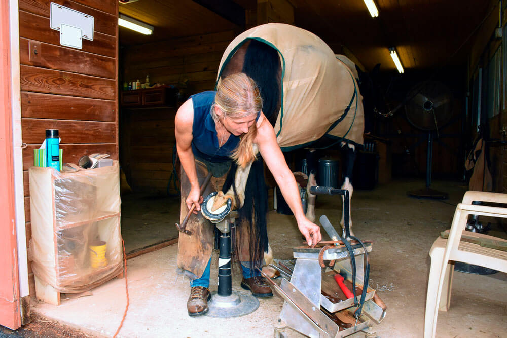 woman farrier is working with a horse