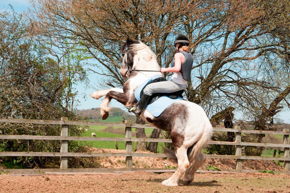 woman in helmet is on a rearing horse
