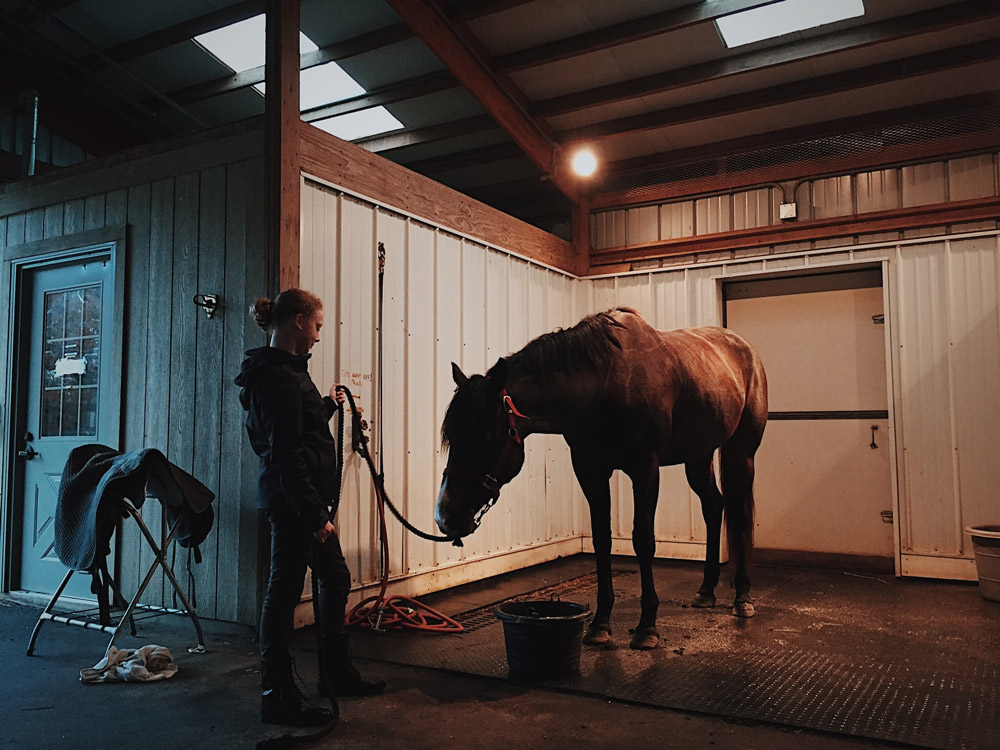 woman is bathing a tied horse