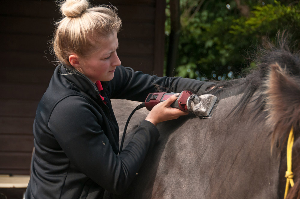 woman is body clipping a horse