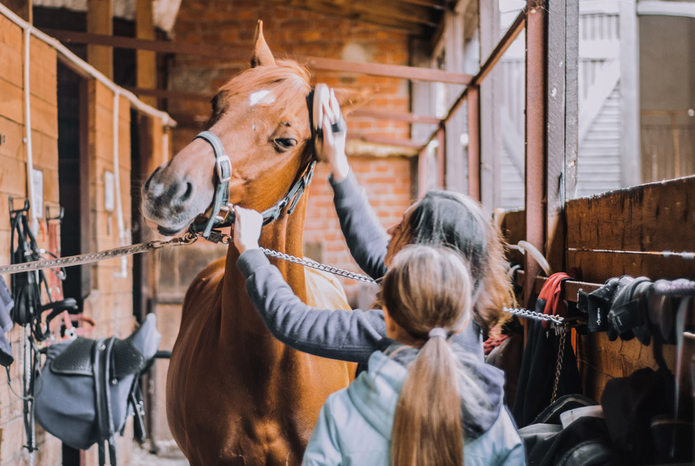 woman is grooming a tied horse in the stables
