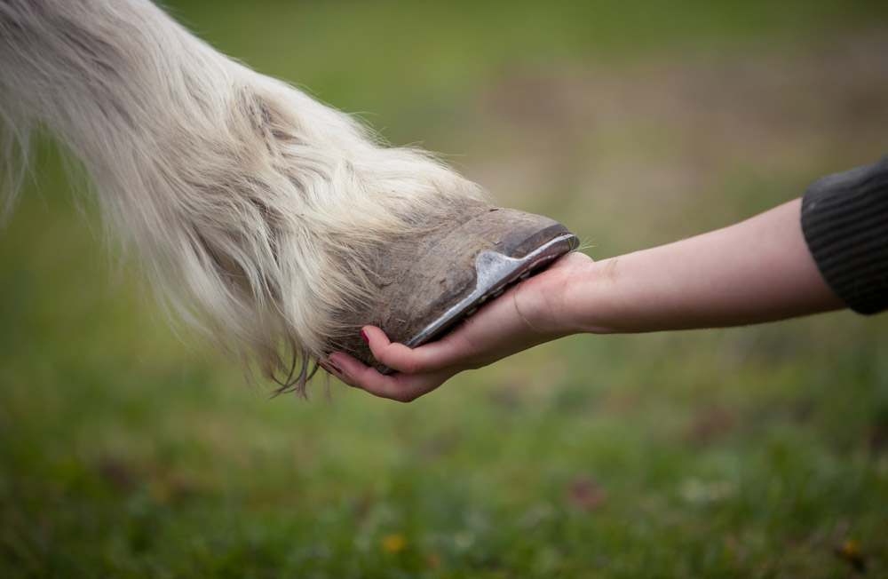 woman is holding a horse hoof