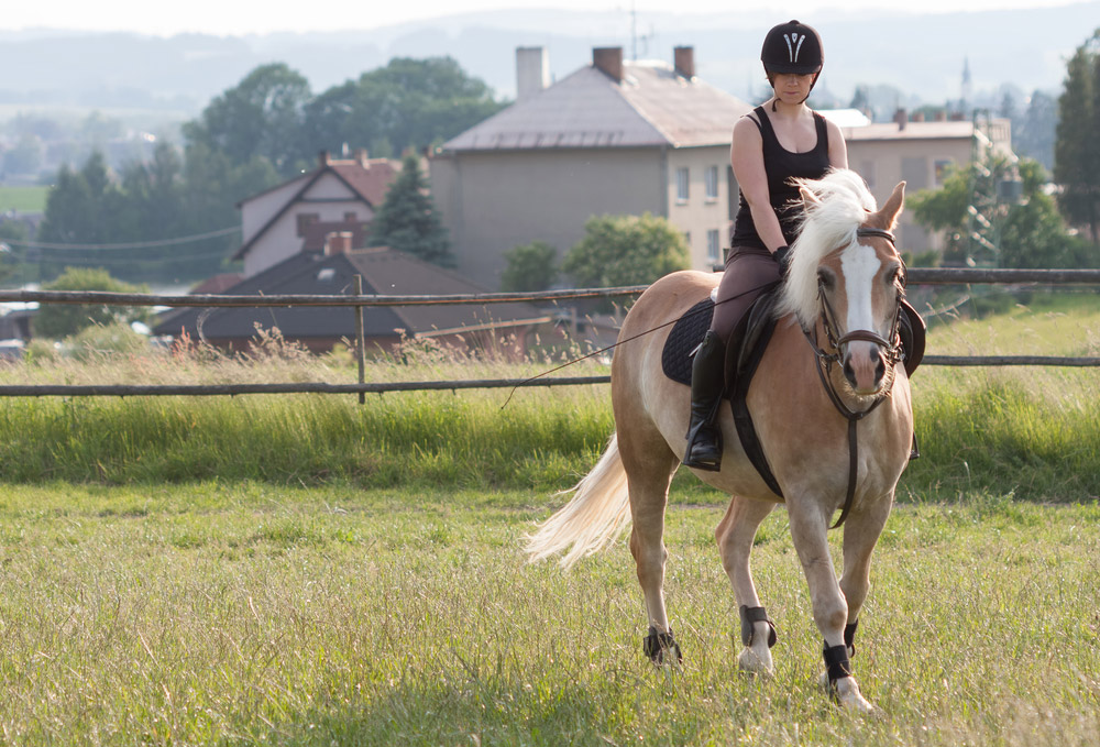 woman is riding Haflinger Horse