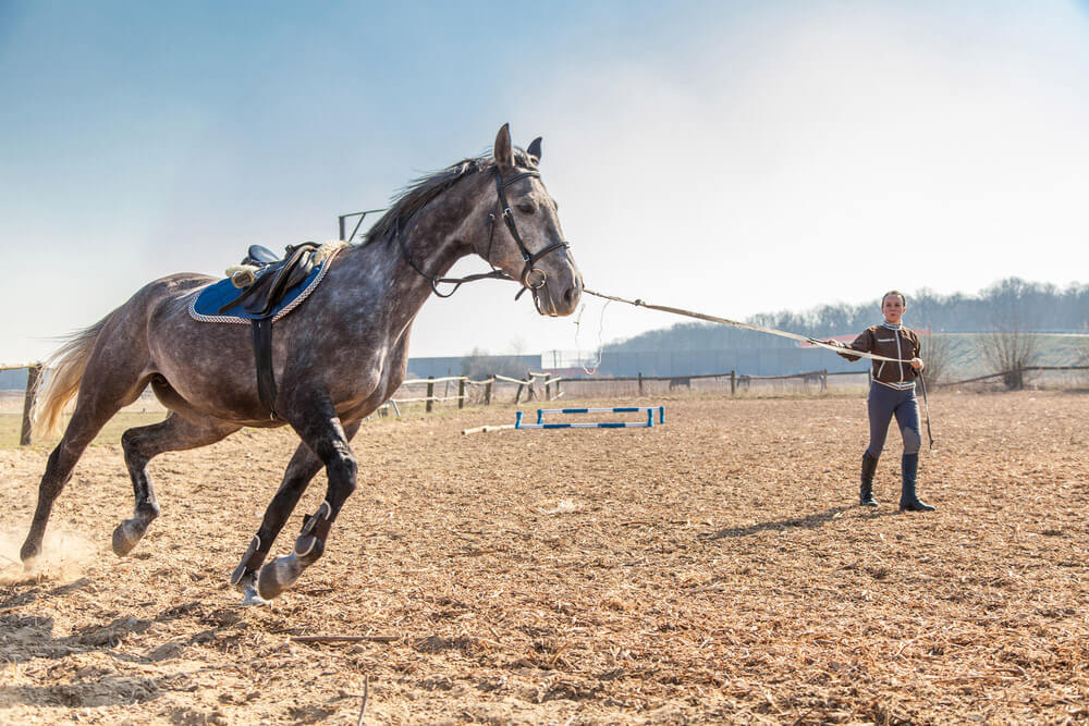 woman is training her grey horse