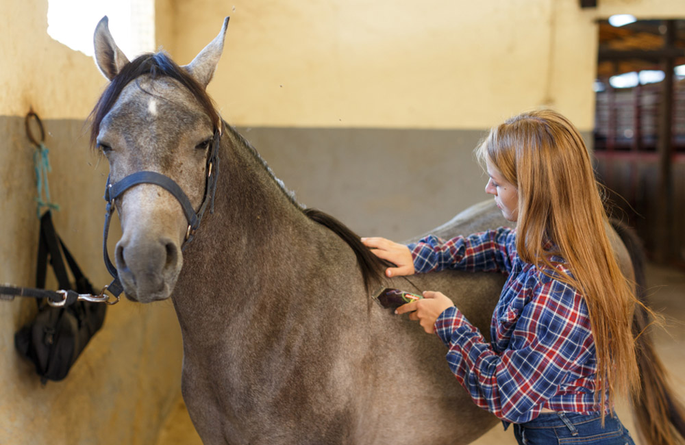 woman is trimming horse mane