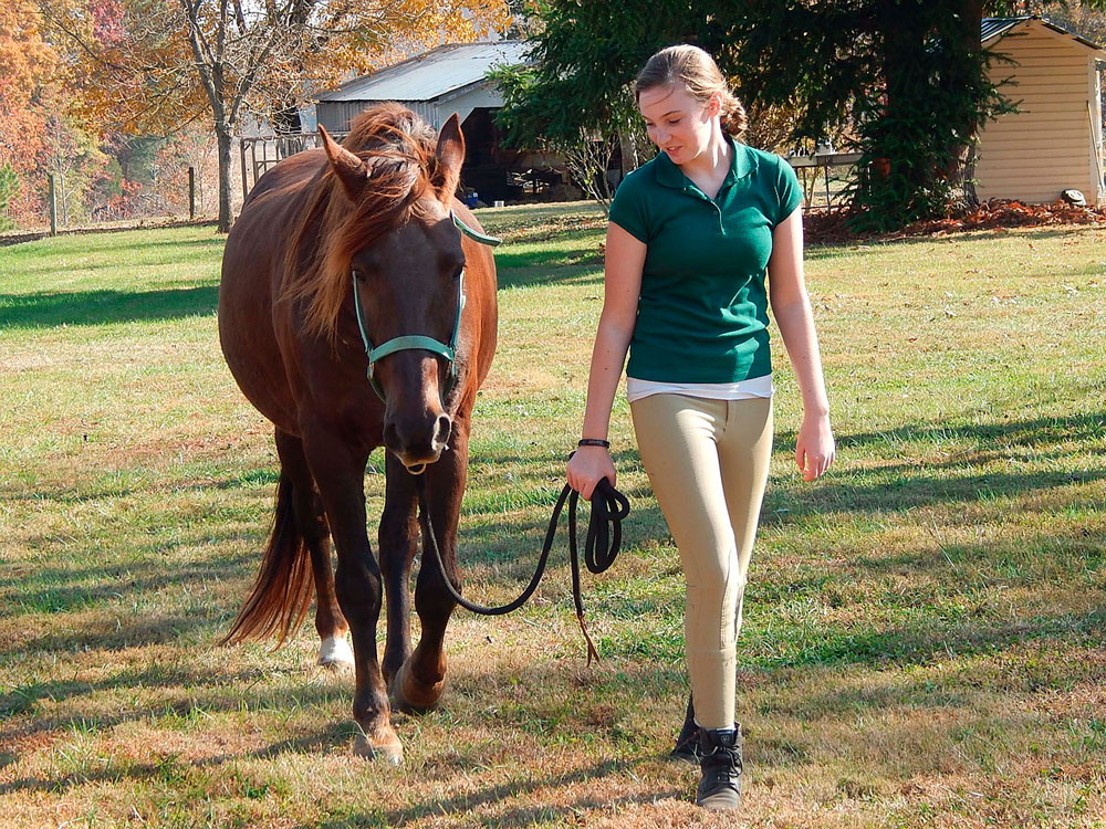 woman leading Tennessee Walking Horse