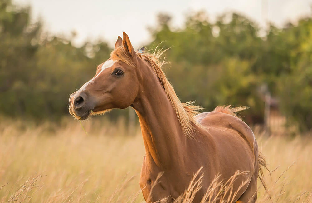 young horse grazing in field