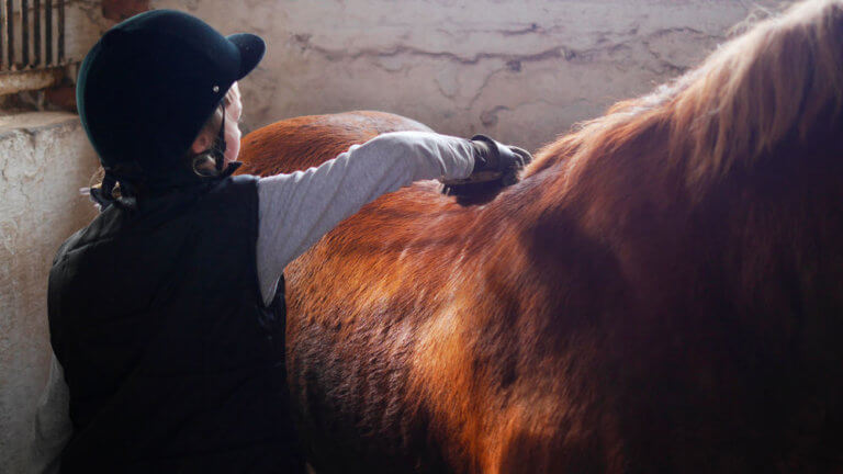 young rider do horse grooming